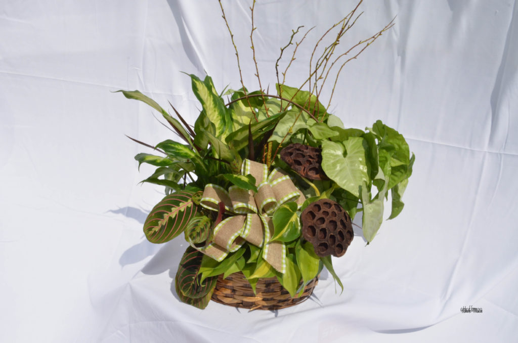 plant basket small